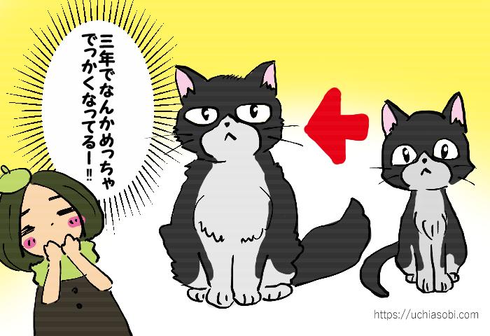 新海誠監督作「天気の子」感想漫画 三年でめちゃくちゃでっかくなったアメ(猫)